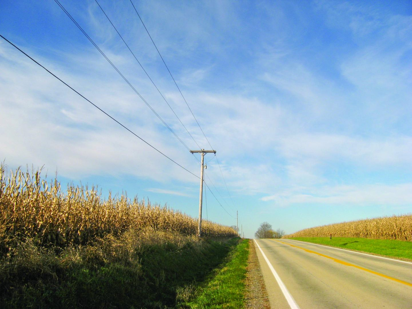 Power lines and corn fields